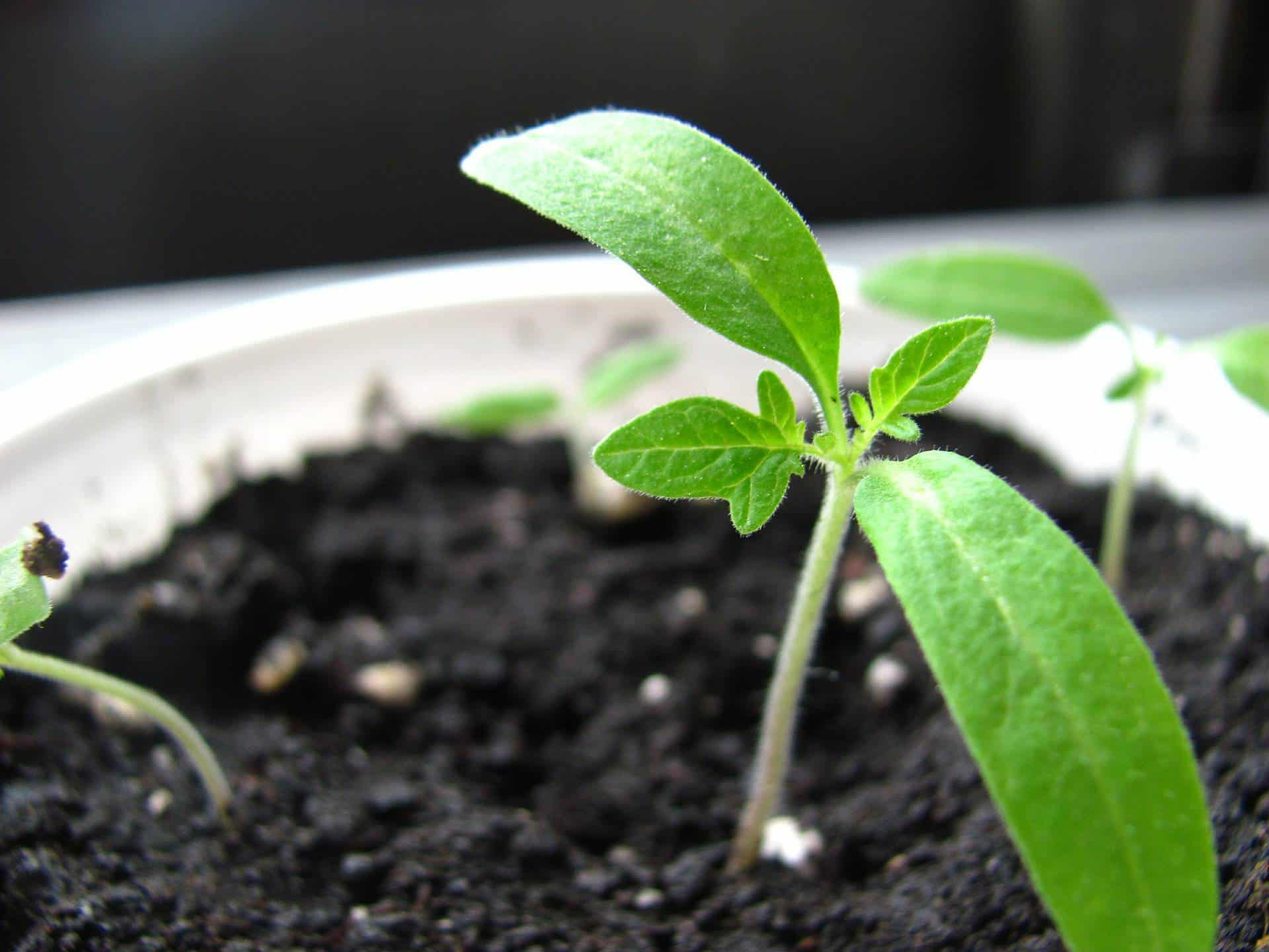 a small green plant growing in a pot